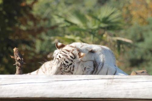 13-10-2018  Zoo Safaripark Stukenbrock